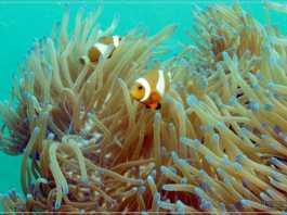 Diving and Snorkeling in P. Abang, Batam