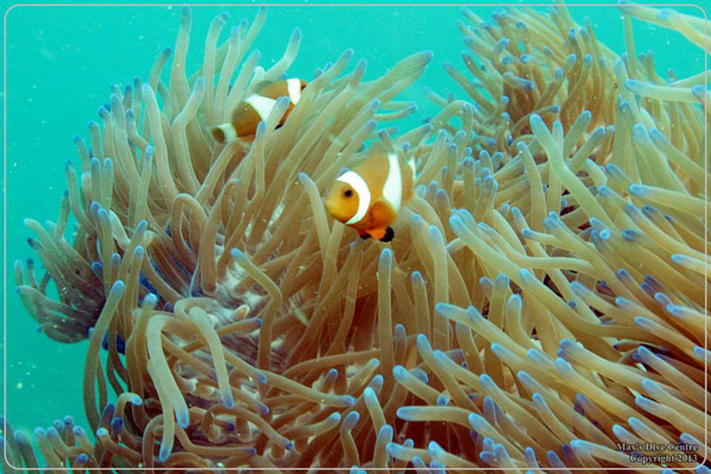 Diving Snorkeling Spots in Batam - P. Abang