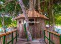 Tarzan's House Kepri Coral