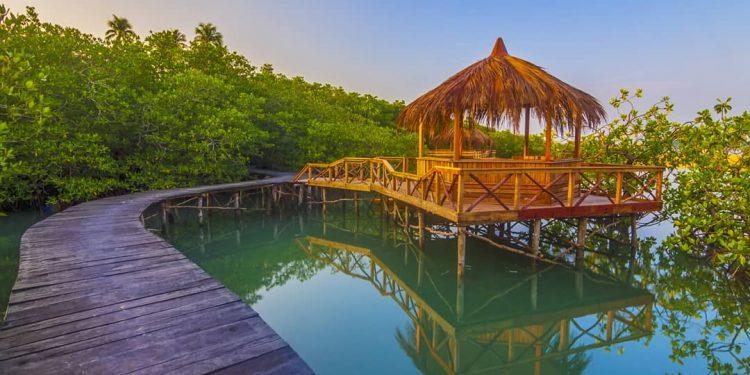 Kepri Coral Island Mangrove Forest