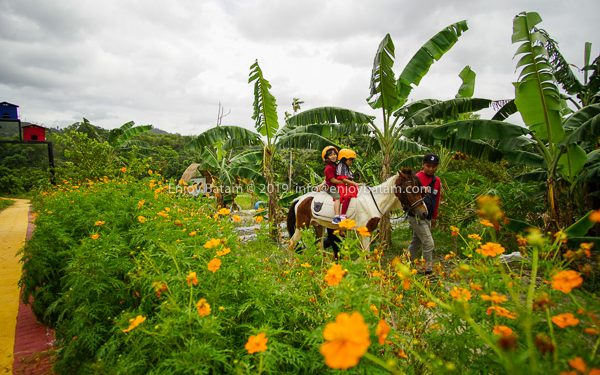 Riding while enjoying the flower garden. More photos below the article.